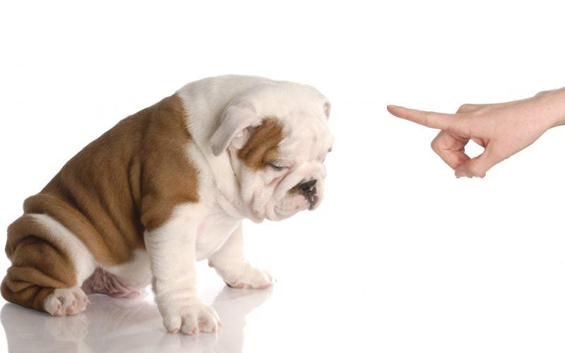 5 Steps to Handling Criticism